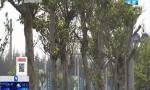 海口:7场义务植树活动今日举行 市民可电话网络报名参加