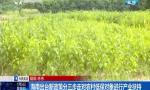海南出台新政策分三步走对农村低保对象进行产业扶持