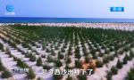 陈海仁:六年奋斗 让荒岛变绿洲
