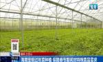 海南安排过年菜种植 保障春节期间对特殊菜品需求
