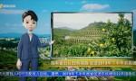 AI播报丨海南出台22条措施 促进2019年下半年农民增收