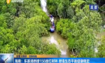 海南:东寨港新增158亩红树林 增强生态平衡健康稳定