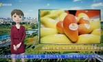 AI播報|海南5個區域公用品牌入選中國農業品牌目錄