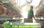 乐东蛋鸡:近海山坡有利防疫 中药防病保障品质