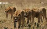 东非猎影 上集