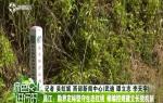 昌江:勘界定标坚守生态红线 修编控规建立长效机制