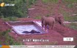 生命守护者 营救亚洲象