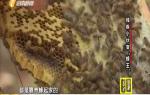 """《大愛海南》殘疾小伙變""""蜂王"""""""