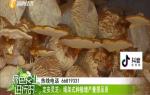 定安:靈芝即將成熟上市 孢子粉品質好價格高