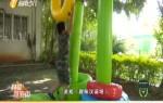 《科教新海南》暑期特別報道《少年突擊隊》2019年08月14日