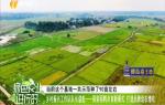 《绿色农业进行时》2019年11月11日