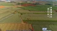 中国海岸行·湛江(中)