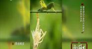 昆虫世界多奇妙 感受弱小生命的不可思议