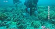 我在南海种珊瑚