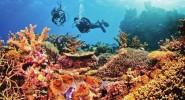 南海瑰寶·珊瑚