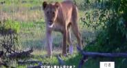 狮子之心·第二集