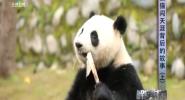 熊猫闯天涯背后的故事(上)