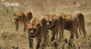 東非獵影 上集