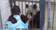 熊猫闯天涯背后的故事(下)