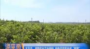 東方轉身:從能源工業基地到熱帶特色農業之鄉