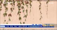 《中国旅游新闻》2019年01月09日