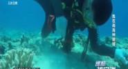 我在南海種珊瑚
