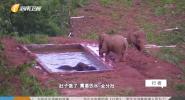生命守護者 營救亞洲象