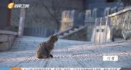 猫的城 猫的人间