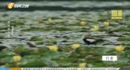 适者生存 湿地的力量(三)