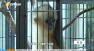 动物幼儿园·下集
