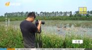 拍摄日志 湿地的力量(四)