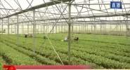海南将从8个方面 抓好冬春瓜菜产销工作