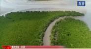 国庆假期·出游 海口东寨港红树林科普游吸引游客