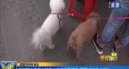 開口警方開展文明養犬宣傳排查行動 規范城市養犬行為