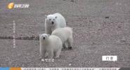 北極留學生 北極夏未央
