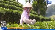 2020中國(五指山)早春茶開采節活動啟動