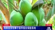 自贸快讯 海南省首批椰子苗木综合保险落地