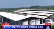 穩定生產 延伸產業鏈 海南橡膠多舉措培育新功能