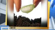 生活技巧:植物的种植与嫁接 教您正确方法