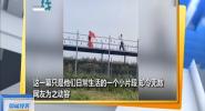 陕西:为给大妈拍视频 大爷一路小跑