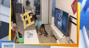 广东:家庭监控录像 拍下可爱一幕