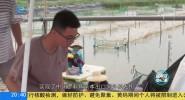 海南岛纪事 一条鱼的革命