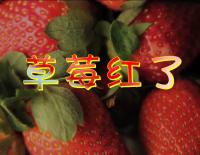 《草莓紅了》