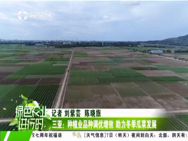三亚:种植业品种调优增效 助力冬季瓜菜发展