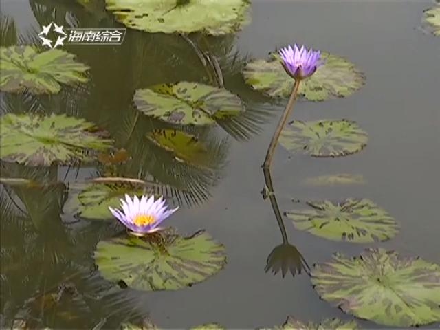 海南:加强与泛珠角农业合作热带花卉 预计2020年总产值70亿