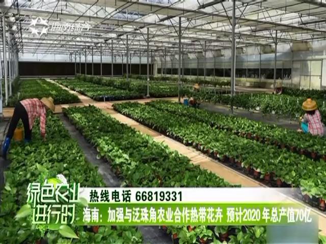 《绿色农业进行时》2018年01月13日
