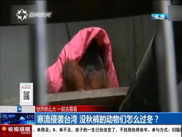 寒流侵袭台湾 没秋裤的动物们怎么过冬?