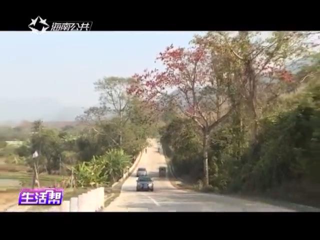 """昌江:""""昌化江畔木棉红"""" 书记检查准备工作"""