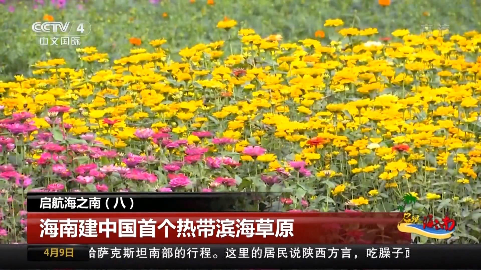 启航海之南(八) 海南建中国首个热带滨海草原