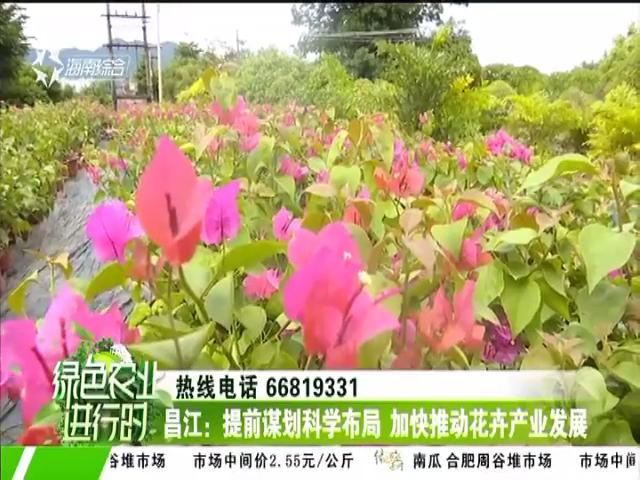 昌江:提前谋划科学布局 加快推动花卉产业发展